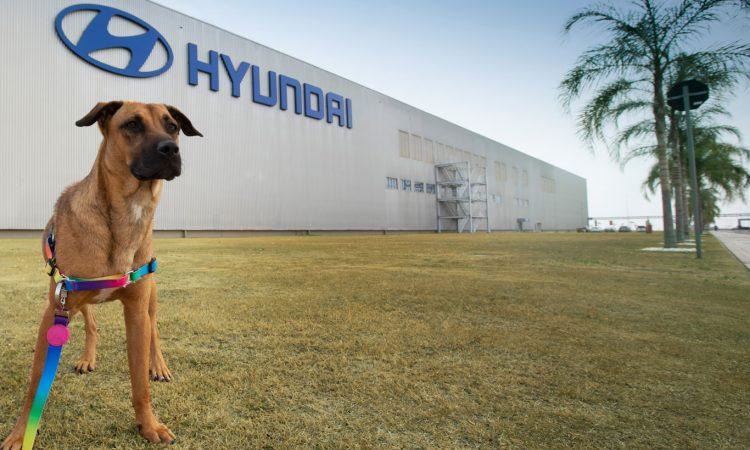 Cão Tucson visita fábrica da Hyundai [divulgação]